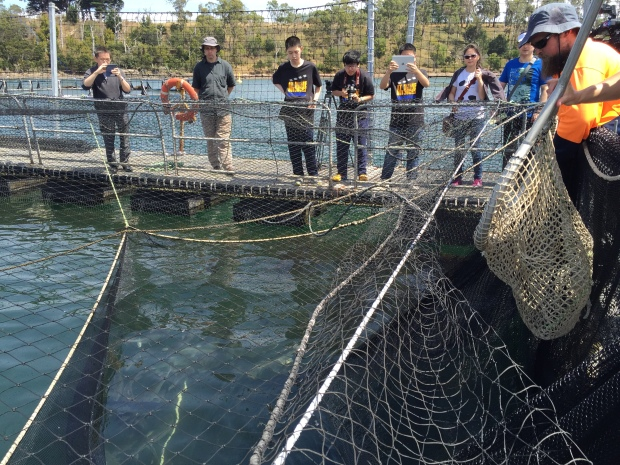 The students assisted in catching a small crowd of fish from the 20 000 fish in the cage. About two dozen salmon can be seen schooling in the bottom left of the image.